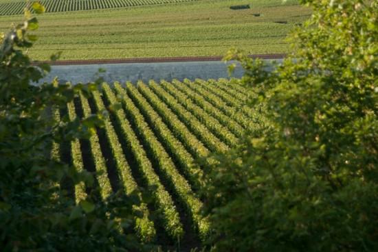 Clos Hrug con 0,685 ettari tutti a Pinot Noir