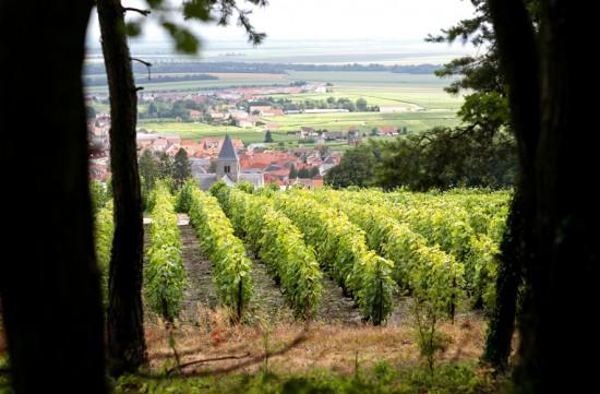 foto del villaggio Gran Cru di Le-Mesnil-sur-Oger