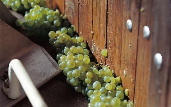 champagne annate migliori, uva