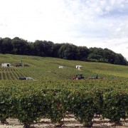 Vendemmia 2014 in Champagne