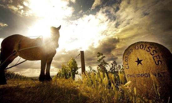 foto del vigneto Clos des Goisses con cavallo per la coltivazione