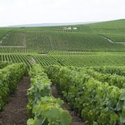 vista delle vigne in champagne