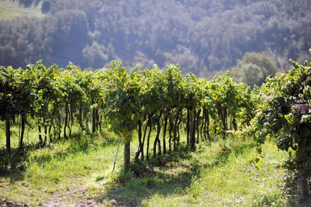vitigni Cantina della Volta