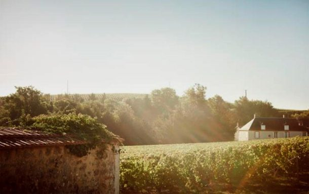 Vigneto Clos du Mesnil